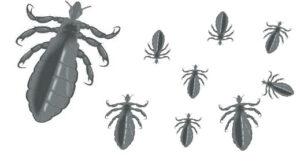 petits parasites